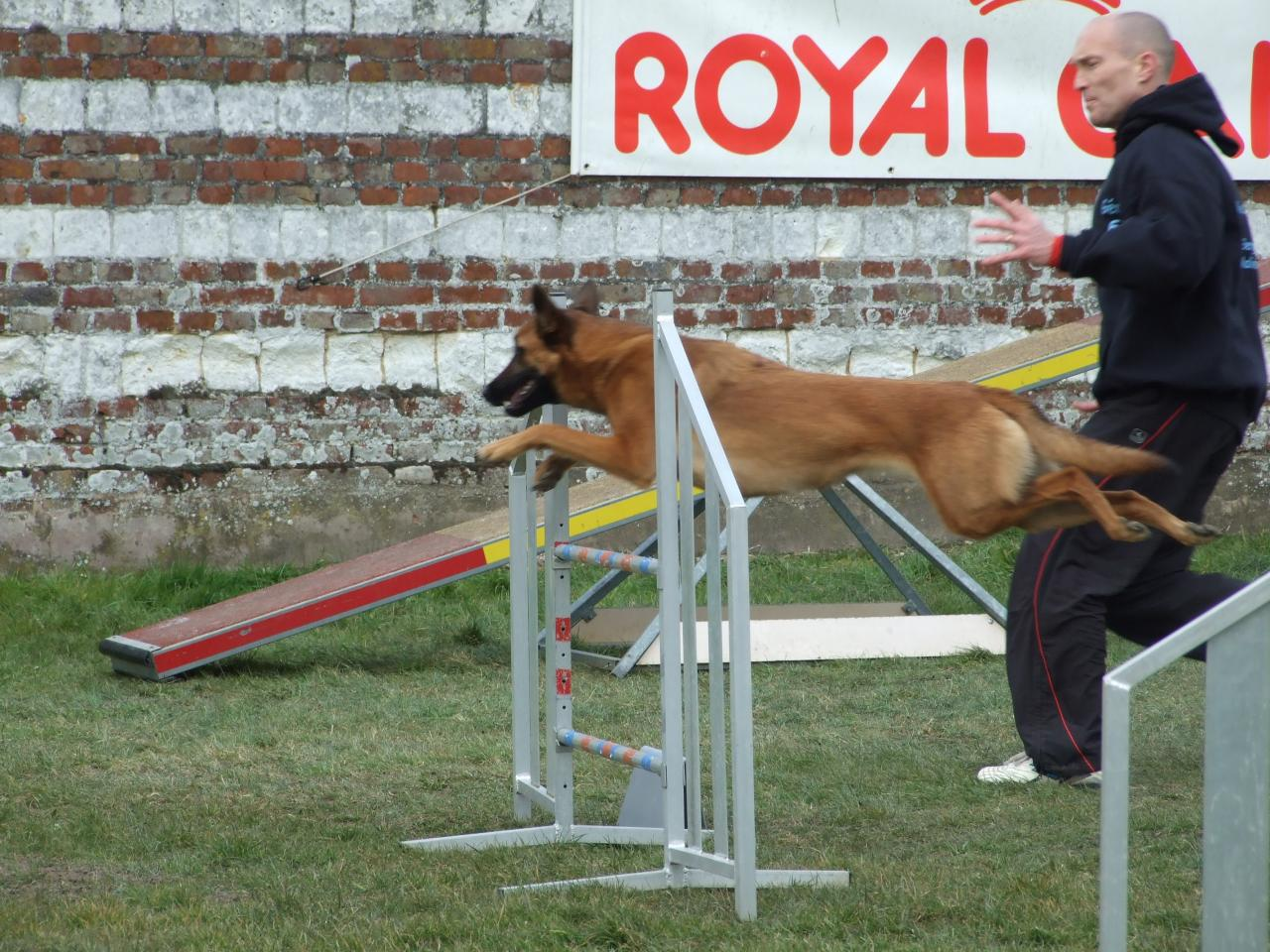 Concours Agility 2013