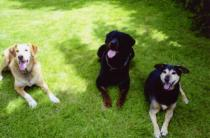 1283945795-118869729-1-photos-de-education-canine-a-domicile-1283945795-1.jpg